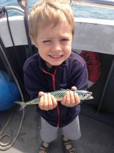 Mackerel, Ewan, July 2015