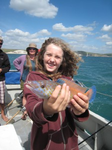 Cuckoo Wrasse, 1lb, 9th August 2016